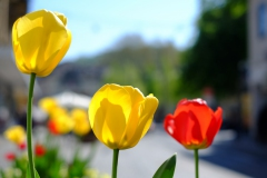 Frühling in Durlach