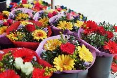 Blumen am Friedrichsplatz