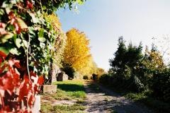 Herbst am Robberg